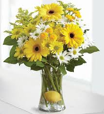 Yellow gerberas vase